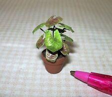 Miniature Dainty Green House Plant #4, Terracotta Pot-DOLLHOUSE HALF SCALE 1/24