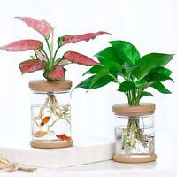 2PCS Hydroponic Plant Vases Flower Pot Transparent Vase Tabletop Planter Decor