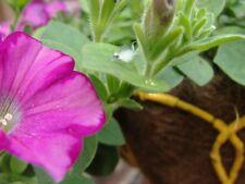 Fuschia Flower Pixie Fairy Flying Home Fantasy Prints / Cemetery Grave Flowers