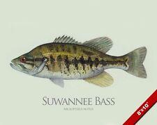 Suwannee Bass Fish Painting American Freshwater Fishing Art Real Canvas Print