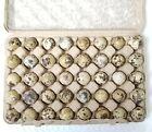 (40) Hollow Desert Assortment Quail Eggs for CRAFTS! (Hand Blown - 1 Hole)