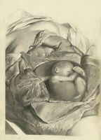 Human Chest Govert Bidloo Anatomy Poster De Humani Corporis 1685
