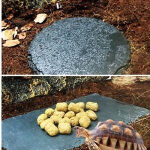 Reptile Turtle Natural Rock Basking Platform Grinding the Nail Food Dish