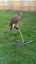 Stainless steel Falconry real bow shaped perch large harris hawk goshawk etc