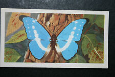 Blue Morpho   Helena   Tropical Butterfly  Illustrated Colour Card  VGC