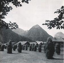 PERTISAU c. 1959 - Meules de Foin Ferme Autriche - NV 1300