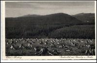 Elend im Oberharz Harz Postkarte ~1920/30 Brockenblick mit Barenberg ungelaufen