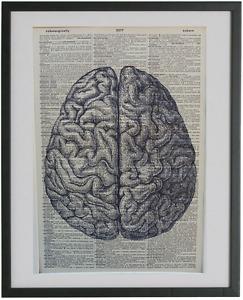 Human Brain Wall Print No.202, anatomy art, medical gifts, doctor gifts, nurse