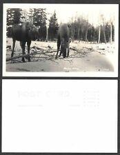 Old Alaska Real Photo Postcard - Pair of Moose