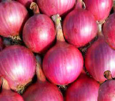onion californian red vegetable seeds 100 seeds onion red shine