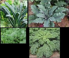 COMBO PACK KALE 50 Seeds each Lacinato, Red Russian, Blue curled Vates, Siberian