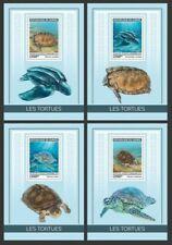 Guinea 2019 fauna turtles S201904