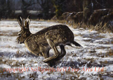 Running Hare in Snow Christmas cards pack of 10. C366x