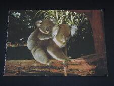 PHILLIP ISLAND VICTORIA AUSTRALIA KOALA AND YOUNG AT RESERVE POSTCARD