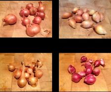 40 Assorted Potato Onions- Very Rare