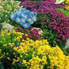 Steingartenstauden Steingarten Mischung 2000 Samen