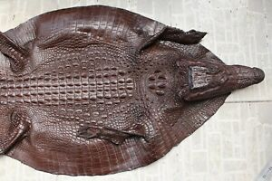 Brown Genuine Real Crocodile Alligator Skin Leather Hide For Decoration