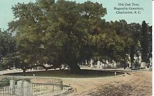 Early 1900's Old Oak, Magnolia Cemetery in Charleston, SC South Carolina PC