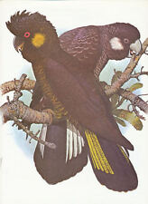 Yellow, and White Tailed Cockatoo by W.T Cooper vintage print