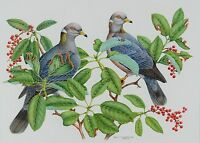 Dale C Thompson Original Watercolor Painting Pigeons 1992 American Listed Artist