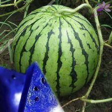 100pcs FRESH Blue Watermelon Seeds Organic Vegetable Fruit for  Home Garden