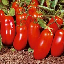 Tomato Vegetable seeds San Marzano F1 from Ukraine average / 60 SEEDS