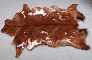 GOAT Western taxidermy Hide Rug Natural Pattern Fur Goat Hide Rode SA-4955
