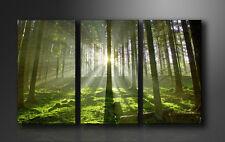 Leinwand Bilder fert gerahmt Bäume 160cm XXL 3 1130+