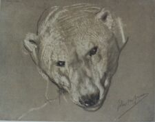 """John Macallan SWAN : HEAD OF POLAR BEAR"" Litho originale THE STUDIO 1901"