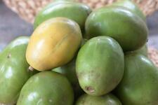 Spondias Mombin - Hog Java Plum Makok - Rare Tropical Plant Tree Seeds (10)