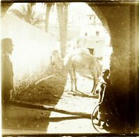 Maghreb Marocco Algeria Tunisia Cammello, Foto Stereo Vintage Placca Lente VR5L5