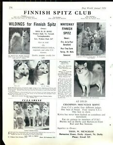 FINNISH SPITZ  DOG PAGE /CLIPPING FROM DOG WORLD 1958