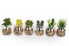 Set 6 Mini Artificial Small Succulent Cactus Cacti Plants Glass Pot Stones
