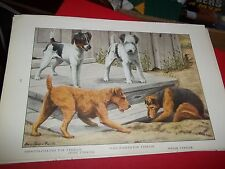 Louis A Fuertes Welsh Irish Smooth Wire Fox Terrier bookplate from 1919 Nat Geo