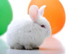 METAL FRIDGE MAGNET White Baby Bunny Rabbit Green Orange Balloons Bunnies