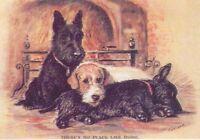 2 Scotties / Sealy - MATTED Dog Print - Lucy Dawson