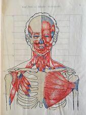 Anatomy Handwritten Medical Lecture Notes Drawings Merkheft Muskeln Menschen