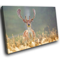 A586 Stag Deer Blue Green Grass Funky Animal Canvas Wall Art Large Picture Print