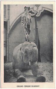 Alte AK Grand Cirque Kludsky, Zirkus, Cirkus, Elefant, Dressur