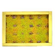 Premium turc Végétarien kadayif pistaches fraîches Sweet Celebration Boîte Cadeau