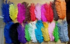 """Fly Tying Feathers"". Craft. Sport Store. Thread. Floss. Yarn. Wire."