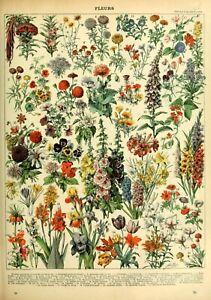 Vintage Flowers Chart Print , Flowers Print Quality Print A5 to A1