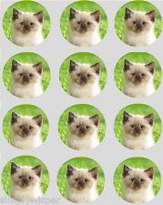 12 Cute Kitten Cupcake Decoration Edible Rice Paper Cake Toppers PreCut 40mm Cat