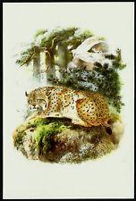 EURASIAN LYNX (Lynx lynx), Monograph of the Felidae, by Daniel Giraud Elliot