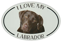 Oval Dog Breed Picture Car Magnet - I Love My Labrador (Chocolate Lab)