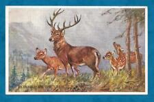 1950'S MABEL GEAR PC MONARCH OF THE GLEN - RED DEER FAMILY
