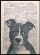 Vintage Dog Staffy Print 1933 Dictionary Page Wall Art Picture Animal