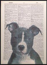 Vintage Perro Staffy impresión 1933 Diccionario página Pared Arte Foto Animal
