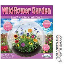 Fleur sauvage jardin verre terrarium développer votre propre découverte jouet cadeau nouveauté enfants