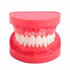 Dental 1:1 Standard Adult Teeth Model M7004 Demonstration Teeth Study Model NEW